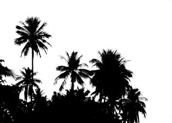 coconut tree and plant on white background.