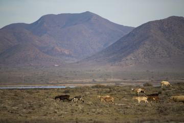 Natural park of Cabo de Gata