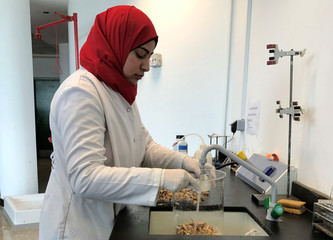Researcher Amal El Husseiny works on her project to create biodegradable plastic bags from shrimp shells, a project in collaboration with Nottingham University, at the Nile University in Cairo
