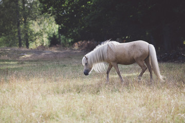 Side view of horse walking on grassy field