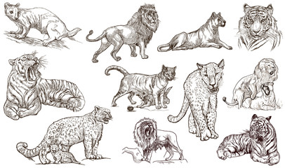 Animals around the World. CATS. An hand drawn full sized pack. Line art.
