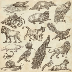 Animals around the World - An hand drawn full sized pack. Hand drawings. Line art.
