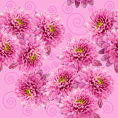 Seamless infinite pink floral background. For design and printing. Background of natural chrysanthemums.