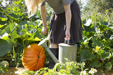 Caucasian woman carrying watering can in garden near pumpkin