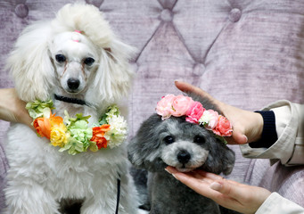 Visitors wear chaplets on their pet dogs as they take pictures of them at a photo spot during Interpets in Tokyo