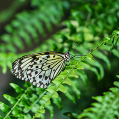 black and white patterned rice paper butterfly on green ferns