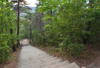 Лестница в гору. Крутой подъем 1000 ступеней. Терренкур. Парк Кисловодск. КМВ. Россия.