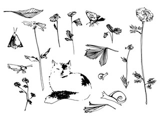 Garden set. Flower, butterfly and snail sketch illustration. Hand drawn vector image.