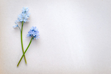 Beautiful photo greeting with blue small flowers on a background of white paper Wall mural