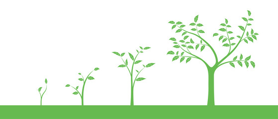 Vector illustration of a set of green icons - plant or tree growth phase, isolated on white background