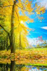 Beautiful autumn scene with sunshine over the colorful tree and leaves reflected in a lake