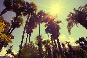 Sun shining through tall palm trees. Summer, fashion, travel, vacation, tourism, lifestyle and weather concept.