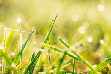 Blurry morning grass macro.