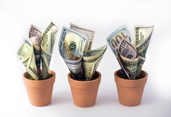 Financial growth. One hundred dollar bills growing in flower pots. Three orange  clay plant pots with growing us currency bills money.