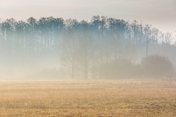 Early spring foggy meadow at sunrise
