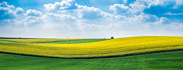 Foto auf Acrylglas Kultur Yellow rapeseed field against the blue cloudy sky