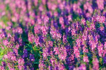 Beautiful flowers, flower field.