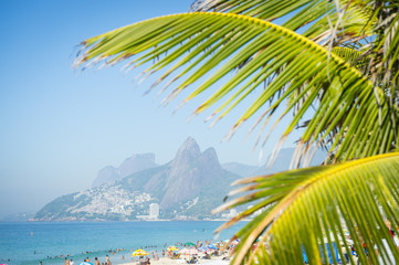 Scenic view of the Rio de Janeiro skyline at Ipanema Beach through palm fronds