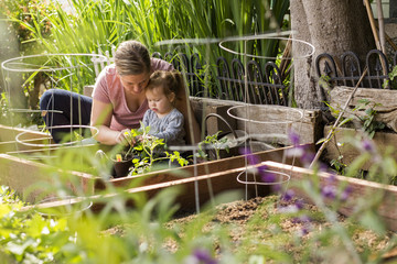 Caucasian mother and daughter planting seedling in garden