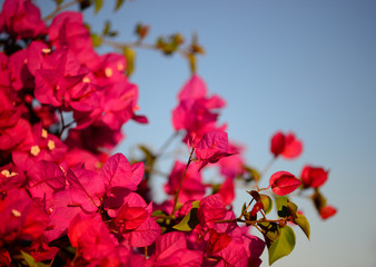 Colorful macro flowers background with blue sky. 