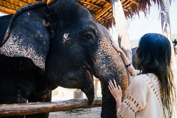 Model woman hugging a big elephant in the zoo-park