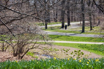 early spring landscape with spring blooms