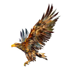 Isolated drawing of a flying eagle on the side