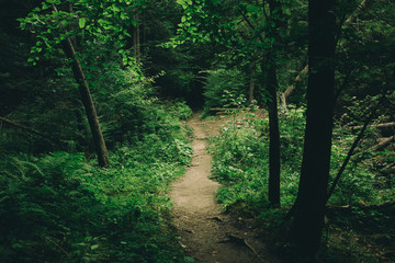 The Trail in the Woods