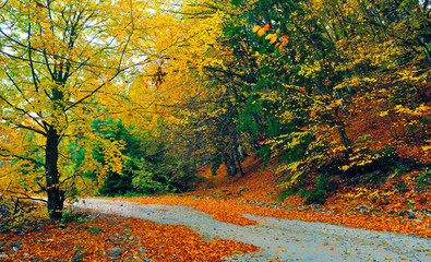 Autumn landscape with road and yellow tree, panoramic image.
