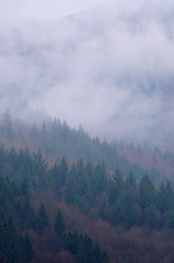 Forested mountain slope in low lying cloud in a scenic landscape view