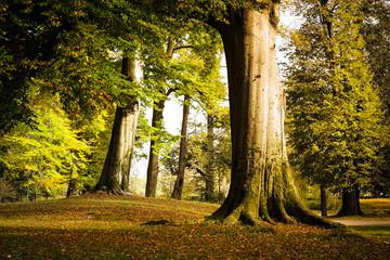 Stare drzewa w zabytkowym parku