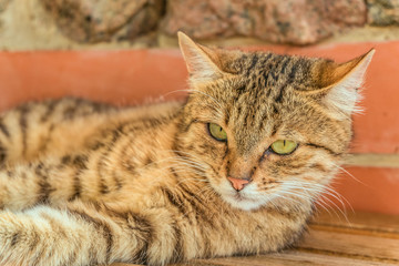 Portrait of cute tabby street cat. Lying tomcat. Limited depth of field.