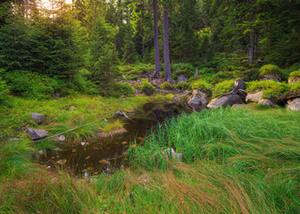 Picturesque forest glade in a mountainous area of the Czech provinces with a small pond, illuminated by the rays of the sun.