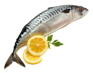 atlantic mackerel fish with lemon isolated on white background