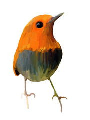Oil Painting  Robin on White Background - Drawing Portrait of Bird