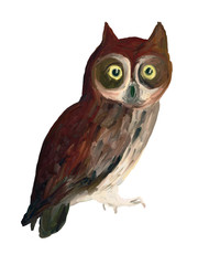 Oil Painting  Owl on White Background - Drawing Portrait of Bird