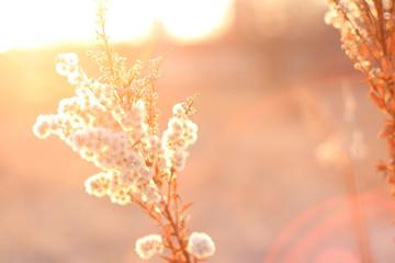 Sun Flare Flower