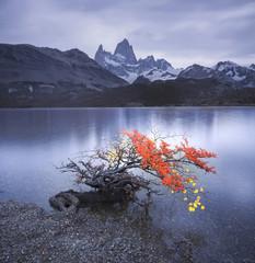 Autumn at the lagoon Capri, mont Fitz Roy, Patagonia, Argentina