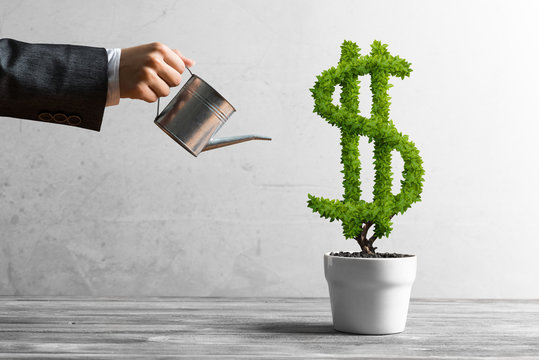Concept of investment income and growth with money tree in pot