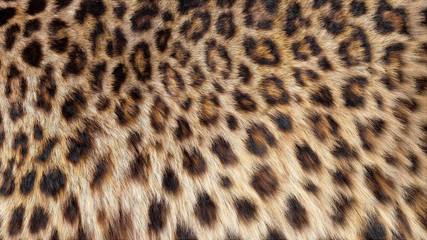 Beautiful leopard fur blowing on the wind, luxury abstract natural texture, close up macro shot of...