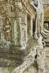 Temple with Cambodian sculpture and huge tree
