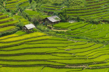 Printed roller blinds Rice fields Small farmer's accommodation for relaxing during farming in the rice terrace at Mu Cang Chai is a rural district of Yen Bai Province, in the Northeast region of Vietnam.