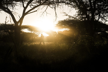 Ranger training and counter-poaching patrols in the forest at sunset