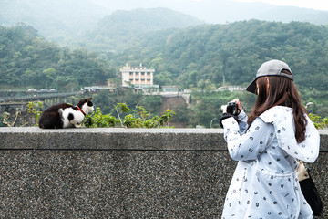 A girl take a photo of a cute cat in the garden