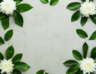 Frame green  leaves with white chrysanthemum flowers on grey stone  background.Abstract.Top view. Copy space