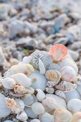 shell beach tropical