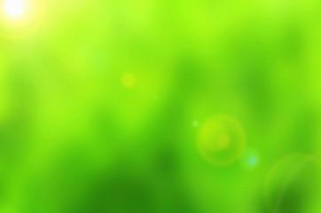 Beautiful green Nature Bokeh.Blurred background