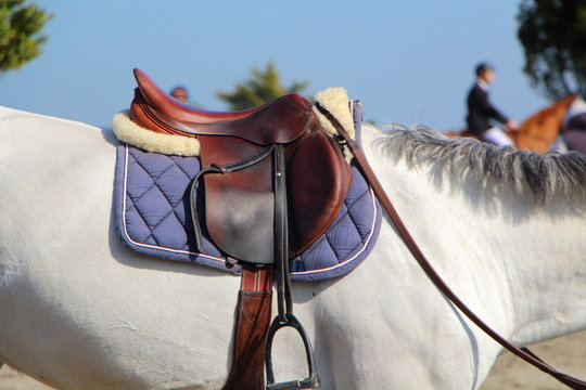 Selle sur cheval blanc
