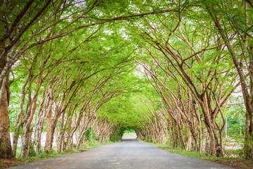 Tree tunnel road