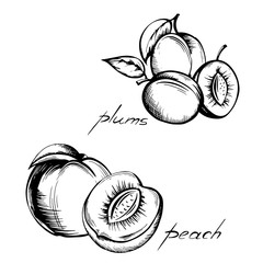 set of vintage images of fruits on a white background , plum and peach in the context of hand-painted in black ink on paper